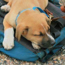 Cute puppy taking a break.