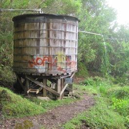 Maunawili Trail Hike 020
