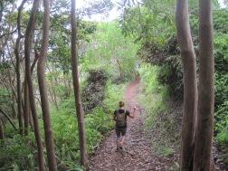 Maunawili Trail Hike 025
